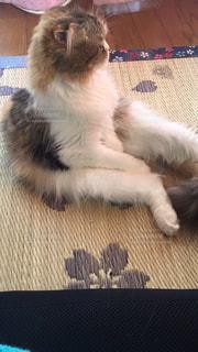 猫の写真・画像素材[164374]