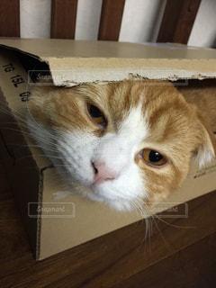 猫の写真・画像素材[164379]
