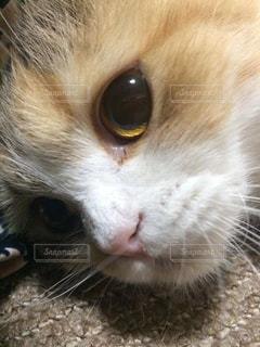猫の写真・画像素材[164386]
