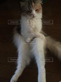 猫の写真・画像素材[164387]