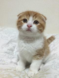 猫の写真・画像素材[164391]