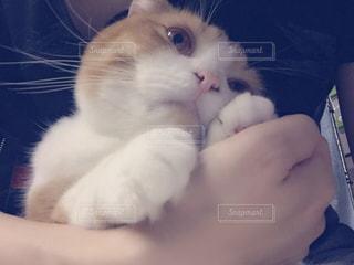 猫の写真・画像素材[164398]