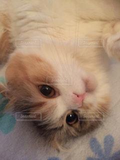 猫の写真・画像素材[164400]