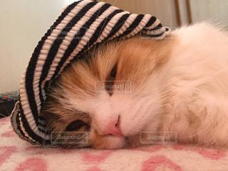 猫の写真・画像素材[164778]
