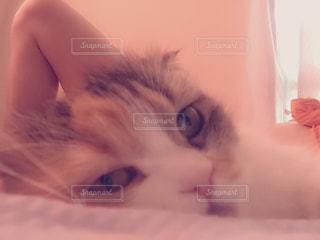 猫の写真・画像素材[165314]