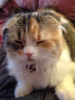 猫の写真・画像素材[165353]