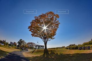 フィールドの真ん中の木の写真・画像素材[856371]