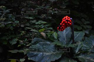 庭の植物の写真・画像素材[867820]