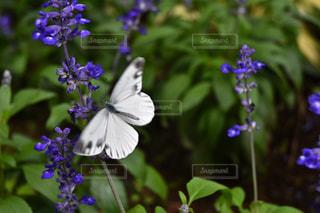 紫の花と花瓶の写真・画像素材[867824]
