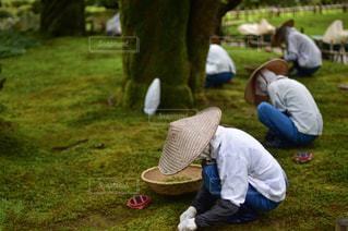 草の中に座っている人々 のグループの写真・画像素材[867846]