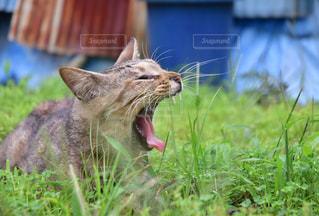 草の中に立っている猫の写真・画像素材[867848]