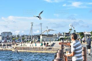 水の体の上を飛んでいる鳥の写真・画像素材[869092]