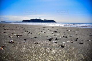 砂浜の上に鳥立ちの写真・画像素材[878035]
