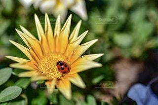 近くの花のアップの写真・画像素材[919567]