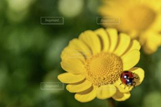 近くの花のアップ - No.919568