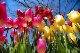 色とりどりの花のグループの写真・画像素材[919569]