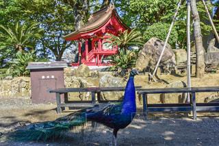 青い壁の前に立っている鳥の写真・画像素材[919579]