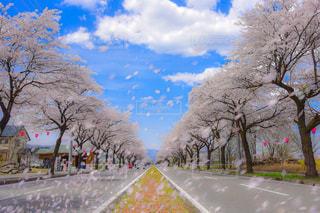 道路の真ん中にツリーの写真・画像素材[919584]