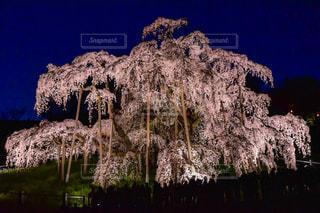 背景の山と木の写真・画像素材[924792]