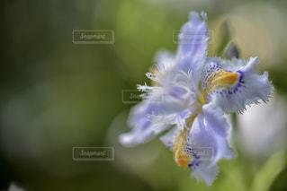 近くの花のアップの写真・画像素材[924810]