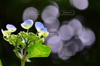 近くの花のアップの写真・画像素材[961868]