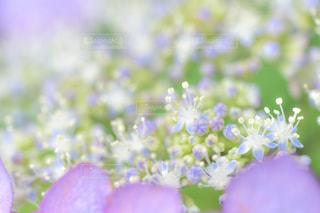 近くの花のアップの写真・画像素材[961870]
