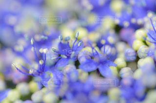 近くの花のアップ - No.961871