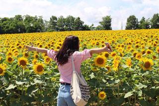 ひまわり畑の写真・画像素材[1177333]