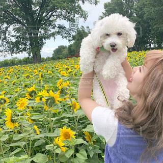 白い花の上に座っている女性と犬の写真・画像素材[2308782]