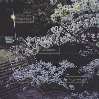 春 - No.458487