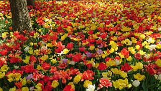 花の写真・画像素材[478020]