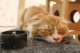 猫の写真・画像素材[459631]