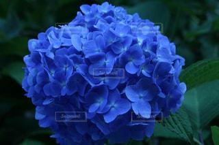 花の写真・画像素材[579128]