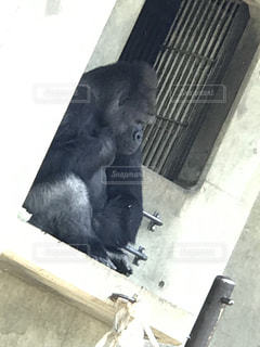 動物園の写真・画像素材[459309]