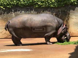 動物園の写真・画像素材[459313]