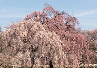 春の写真・画像素材[459518]