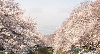 春 - No.461041