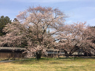 春 - No.461042