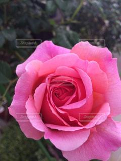 庭の写真・画像素材[461129]