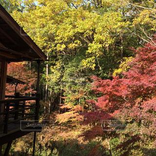 秋の写真・画像素材[475142]