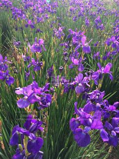 花の写真・画像素材[488092]