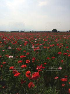 花の写真・画像素材[488093]