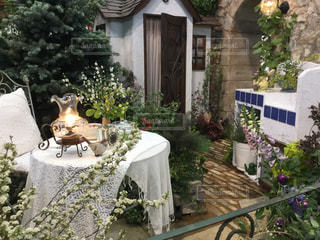 庭の写真・画像素材[508028]