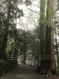 三峰神社参道の写真・画像素材[1171381]