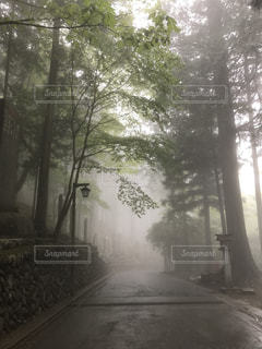 幻想的な三峰神社参道の写真・画像素材[1171386]
