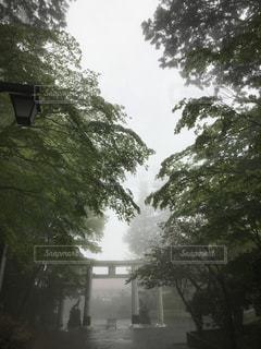 幻想的な三峰神社鳥居の写真・画像素材[1171388]