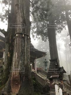 御神木の写真・画像素材[1171402]