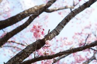 花の写真・画像素材[459866]