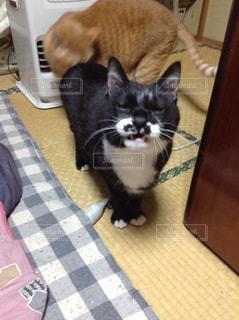 猫の写真・画像素材[571233]
