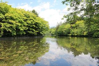 新緑に囲まれた池の写真・画像素材[2288322]